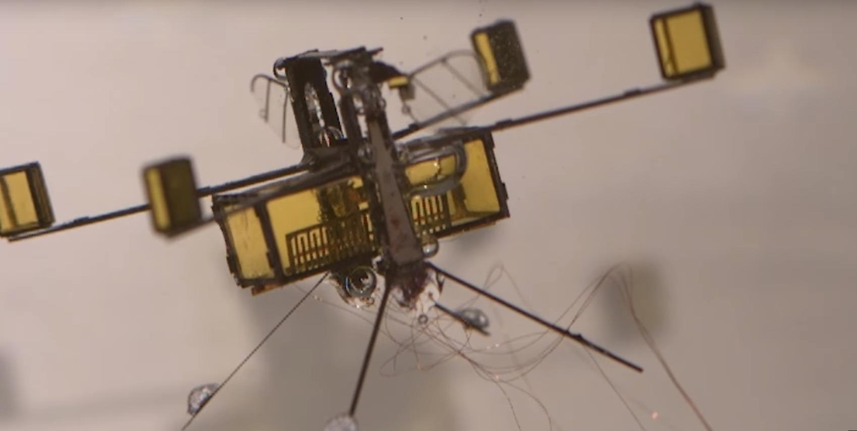 Робопчелы научились летать