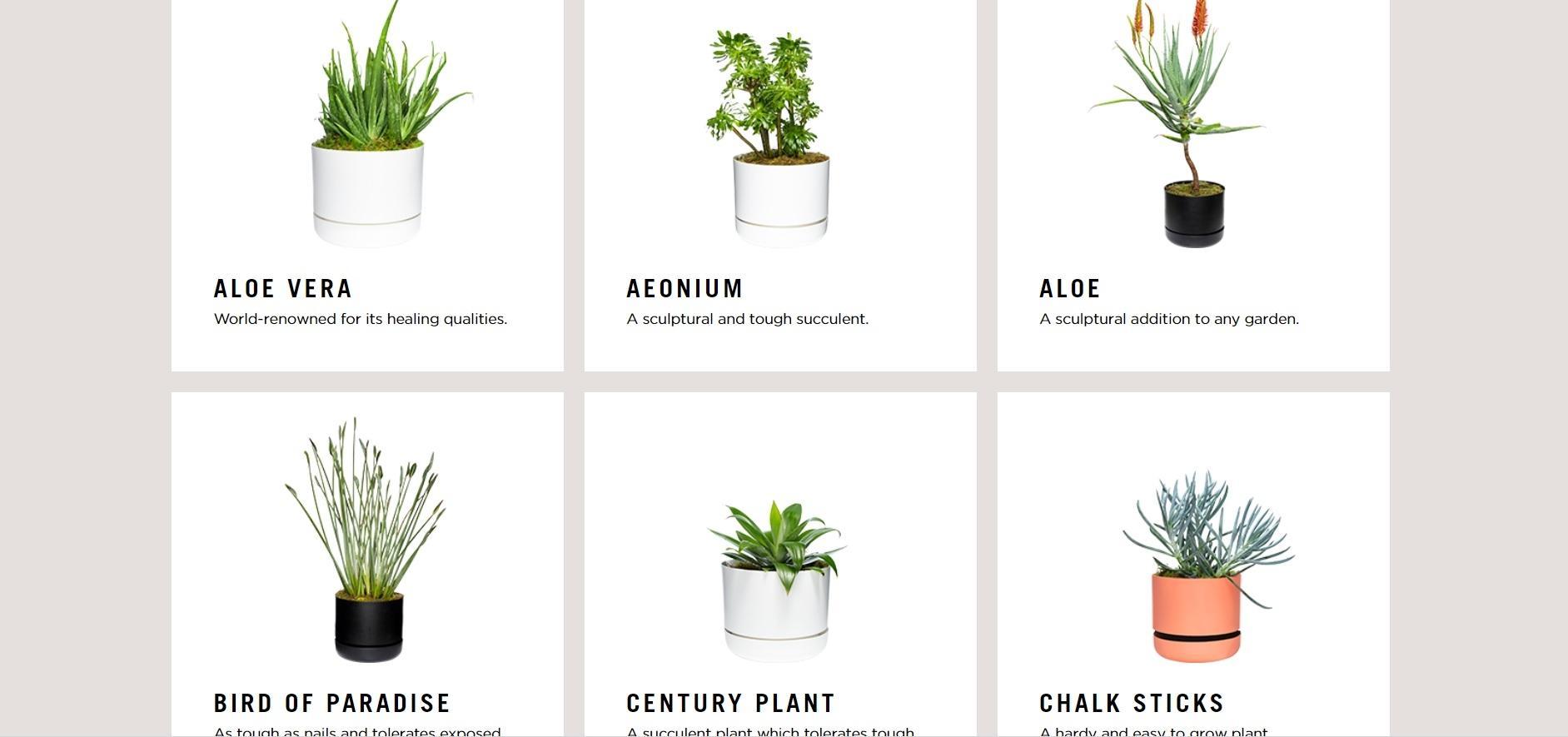AR-приложение поможет подобрать комнатные растения