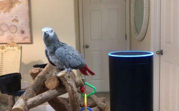 Видео: Попугай управляет Amazon Alexa