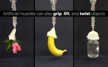 Учёные из Гарварда и МИТ создали робо-мышцы