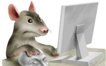 Что делать если не работает мышка?